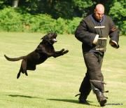 K.n.p.v. Training