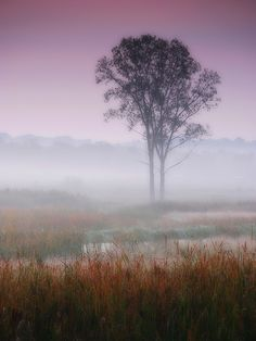 Misty autumn dawn (Sleepy Hollow, Illinois) by James Jordan, via Flickr