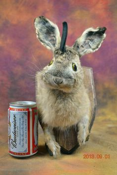 taxidermy rabbit half dody,hanging wall jackalope rabbit,mounted wooden Shield