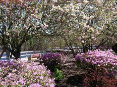 Birch Grove Park in #Northfield #NJ #markattheshore