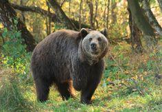 BÄRENWALD Müritz - Tierschutzzentren - Kampagnen & Themen - VIER PFOTEN Deutschland Happy Animals, Cute Animals, We Bear, Cute Bears, Animal Welfare, Worlds Of Fun, Brown Bear, Big Cats, Pet Care