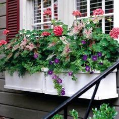 geraniums, caladiums & petunias by lindsey