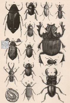 1800s Insect Print Antique Insect Print Vintage by NGArtPrints, #Etsy