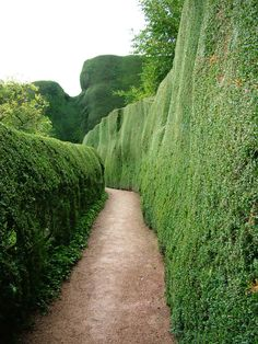 Hedges at Powys castle
