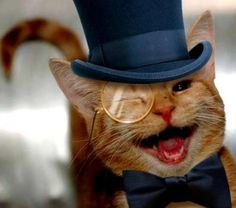 Persian Cats As Hats Cartoon