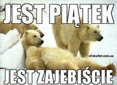 #eFakultet #Poland #Polska #Польша #Piatek