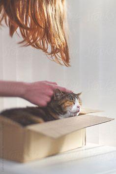 Happy Cat in Cardboard Box :) by CatMacBride | Stocksy United