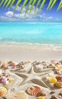 Design Art Designart Caribbean Sea Starfish Beach And Shore Canvas Art Print – 16 - Resim Burada Beach Wallpaper, Summer Wallpaper, Wallpaper Backgrounds, Iphone Wallpaper, Tropical Wallpaper, Trendy Wallpaper, Beach Canvas Art, Canvas Art Prints, Beach Scenes