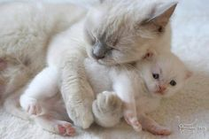 """Now, go to sleep, little one."""
