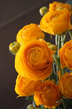 30 Most Beautiful Orange and Yellow Flowers 2019 All orange flowers and yellow flowers are beautiful and with meanings of their own. Yellow Wedding Flowers, Orange Flowers, Amazing Flowers, Pretty Flowers, Colorful Roses, Art Flowers, Flowers Nature, Exotic Flowers, Yellow Roses