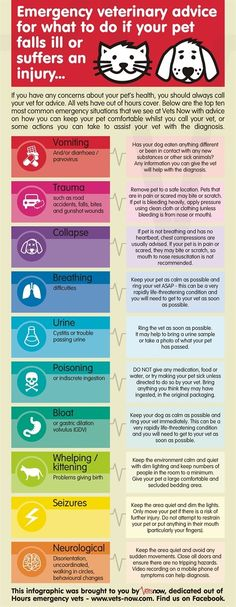 Emergency tips for what to do if you pet gets sick. Some good tips, but if all else fails head to the Vet!