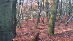 Storeton Woods November 2012