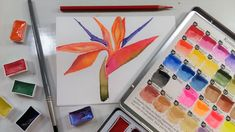 Easy Bird of Paradise Watercolor Tutorial & MozArt Komorebi Watercolor P...
