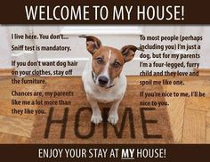 Dogs rules funny dog rules family pet four legged family love sniff my house cute Perros Jack Russell, Chien Jack Russel, Jack Russell Dogs, Jack Russell Terrier, Jack Terrier, Rat Terriers, Terrier Mix, Cat Love, I Love Dogs