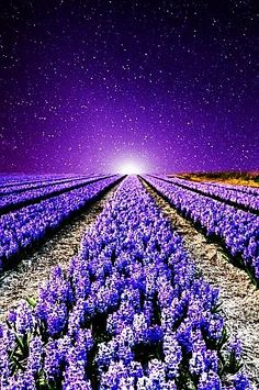 Lavender Field/Lavender Sky, probably smells heavenly
