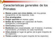 1.1.- CARACTERISTICAS DE LOS PRIMATES