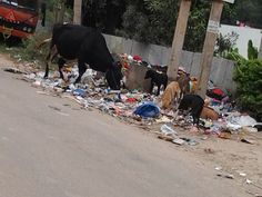"""#Bangalore #Marathahalli """"The roads in pearl paradise layout are not cleaned daily. Even after calling the bbmp call center and the respective contractor, nothing happens. Garbage collection is also not done here"""" - Sampada Bokil. Click on the link to VOTE UP Sampada's complaint to get the issue resolved faster: http://bit.ly/1rVfiXl"""