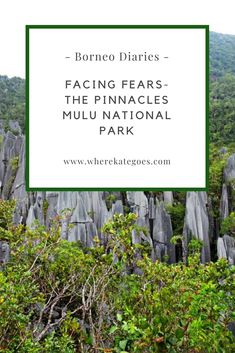 Climbing the pinnacles at Mulu National Park in Borneo is one of my greatest achievements. The steep climb is something that I would usually be scared of but I overcame that this year and had a great time. Find out more here. Facing Fear, Countries To Visit, Borneo, Climbing, Travel Inspiration, National Parks, Asia, About Me Blog, Hiking