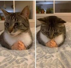 Purrfectly Toasted Caturday Memes Cat Memes) - World's largest collection of cat memes and other animals Funny Animal Memes, Cute Funny Animals, Funny Animal Pictures, Stupid Funny Memes, Funny Relatable Memes, Cute Baby Animals, Cat Memes, Funny Cute, Cute Cats
