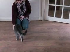Training a cat to come when called