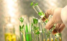 Генетика и ГМО