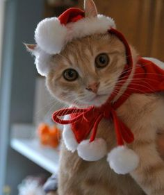 Most cats won't let you dress them up, but if you have one that does, you'll get some really adorable pictures!