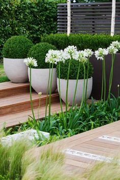 Structured box balls and fresh greens with wafting grasses and white Agapanthus to lift it. Clean and attractive.