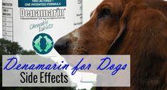 Denamarin For Dogs Side Effects - http://pets-ok.com/denamarin-for-dogs-side-effects-dogs-1869.html