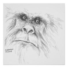 images of Sasquatch art - Google Search