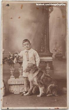 Rough Collie, (c.1910) UK> Vintage #dogs #pets #RoughCollies Facebook.com/sodoggonefunny