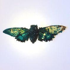 Crystallized Cicada by Tyler Thrasher