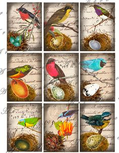 2.5 by 3.5 birds with nests and eggs against antique french text atc digital download collage sheet 228. $3.50, via Etsy.