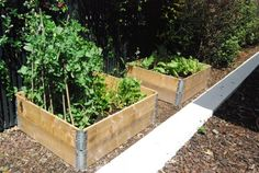 These wooden squares are again made with all the love and care that was possible. Fine shipping pallets were selected for the execution, they were filled with high quality soil that would complement the growth of vegetables. So they made a perfect vegetable garden free of cost. Just draw the list of vegetables that you are planning to grow in them.