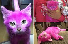"""""""O GRITO DO BICHO"""": Gatinha morre após ser pintada de cor-de-rosa pela... #ogritodobicho#falabicho"""