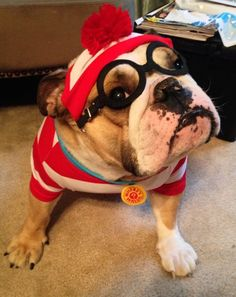 There's WALDO! - Adorable Halloween costume for dogs!