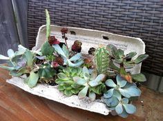 Succulent Sampler: My gift to one of my bestie's. Great way to share and transport small plants AND its adorable!