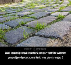 Trendy w kategorii ogrodnictwo w tym tygodniu - Poczta Life Guide, Good Advice, Clean House, Good To Know, Gardening Tips, Life Lessons, Outdoor Gardens, Diy And Crafts, Life Hacks
