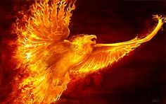 Unraveling The Mystery Of The Phoenix: The Bird Of Immortality