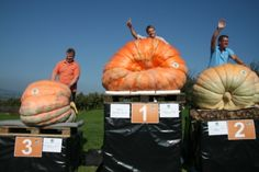 The Winners of 2011: New Swiss Record by Beni Meier with 702 kg