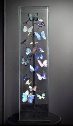 Spécial Papillons morphos (25) sous globe carré