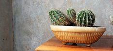 Wabi-sabi plant czyli kaktusy w wersji na staro. #wabisabi #wabisabiwall #wabisabiplant #roślinnewabisabi #cactus #kaktusy #vintage #vintagepottery #ceramika
