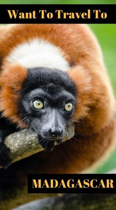 Have you ever wanted to travel to Madagascar? Here's your chance to travel with the Divergent Travelers Adventure Travel Blog in Madagascar! We have put together our own Photography tour that is custom made for our travel blog friends and family's. Click to read more at http://www.divergenttravelers.com/travel-photography-tours/madagascar-photo-tour/