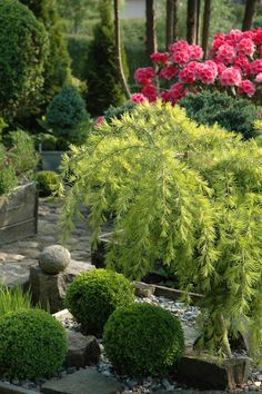 Love the boxwoods, rocks, and evergreen mix.