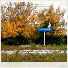#colori d'#autunno a #santarcangelo di #romagna  #rimini #fall #colors #foliage #ferrovia #railway #igersfc #ig_rimini_ #ig_forli_cesena #ig_emilia_romagna #ig_emiliaromagna #vivoitalia #vivoemiliaromagna #vivocesena #vivorimini #volgoitalia #volgoemiliaromagna #volgorimini #myrimini #raccontarimini