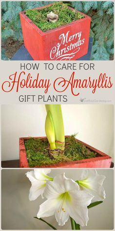 Indoor Gardening Gifts Indoor gardening gift ideas the ultimate houseplant lover gift how to care for holiday amaryllis gift plants container plantscontainer gardeningindoor workwithnaturefo