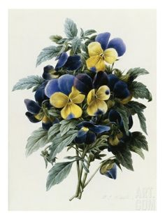 Pansies Giclee Print by Pierre Joseph Redoute at eu.art.com