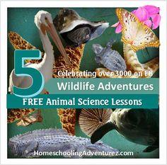 Homeschooling Adventurez: 5 FREE Animal Science Unit Studies for your Homeschool