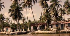 Coqueiro Seco município brasileiro do estado de Alagoas.