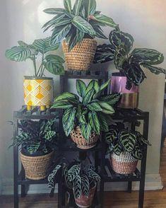 Potted Plants, Cactus Plants, Indoor Plants, Cactus Art, Foliage Plants, Indoor Cactus, Small Cactus, Indoor Flowers, Cactus Decor