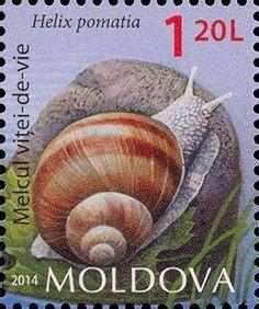Moldova Postage Stamps (Commemorative) 2014 № 883 | Burgundy Snail (Helix pomatia) | Issue: Fauna of Moldova